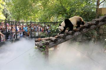 #CHINA-BEIJING-HEAT-PANDA (CN)