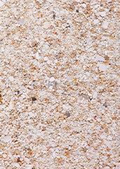 Sandprobe aus Celestun  Yucatan  Mexiko
