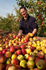 Krempdorf  Deutschland  Apfelernte auf dem Obsthof Harms in der Krempermarsch