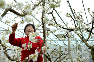 #CHINA-GREENHOUSE-SPRING (CN)