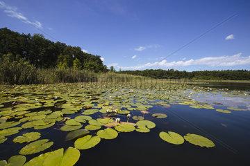 Idyllische Uferlandschaft am Kleinen Kotzower See