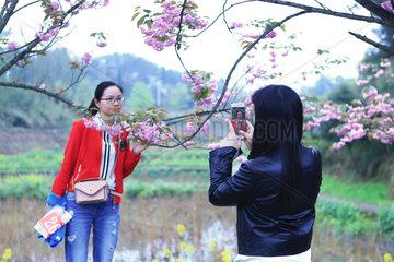 CHINA-CHONGQING-CHERRY BLOSSOMS (CN)