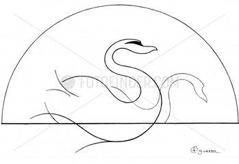 Cisnes - Swans - Schwans