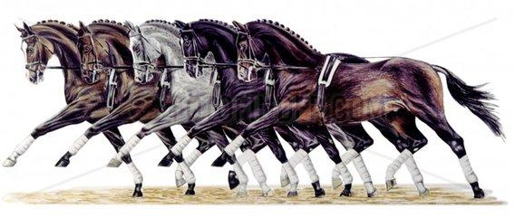 Pferde trabend
