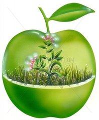 Natuerliches Leben Serie gruener Apfel 2