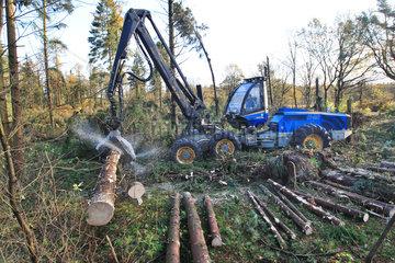 Kropp  Deutschland  Sturmtief Christian sorgt fuer schwere Schaeden im Wald