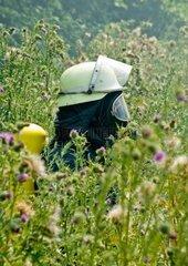 Feuerwehrmann in Atemschutzausruestung inmitten einer mannshohen Distelwiese Fireman with breathing protection in an thistle meadow -