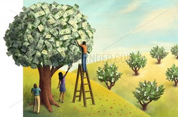 Geldbaeume - Money Trees