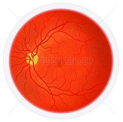 Fundus oculi - Augenhintergrund