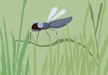 Insekt im Gruenen
