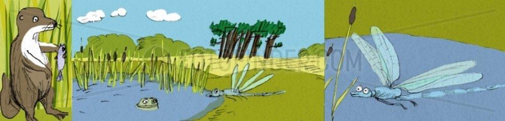 Otter Teich Libelle