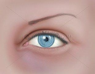 Auge Kaukasier