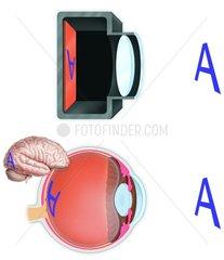 Vergleich Auge - Kamera