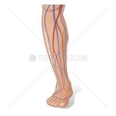 Bein Blutgefaesse Serie Medizin