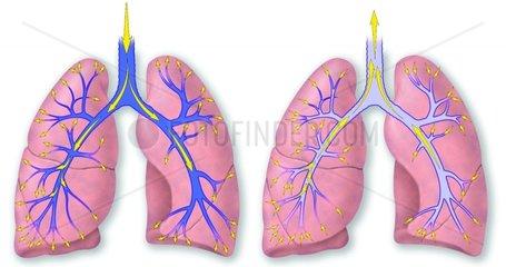 Lungen Atem Atmung Durchblutung