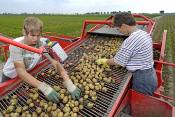 Doebernitz  Deutschland  Kartoffelernte in Doebernitz