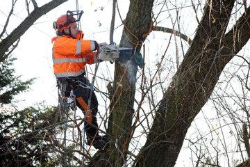 Berlin  Deutschland  Mitarbeiter des Gartenbauamtes saegt einen morschen Ast aus einem Baum