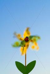 Berlin  Deutschland  ein Windspiel  Whirligig  in Form einer Blume