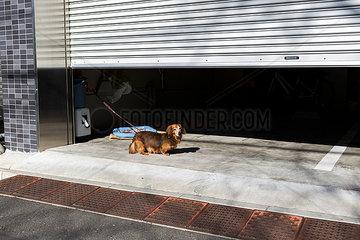 Dackel vor einer Garage