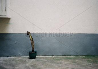 Kaktus vor einer Wand
