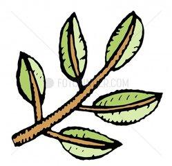 Zweig Ast freigestellt Symbol