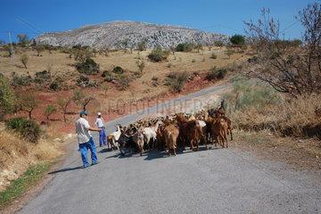 Ziegenhirte in Andalusien