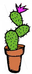 Kaktus Kaktusbluete freigestellt