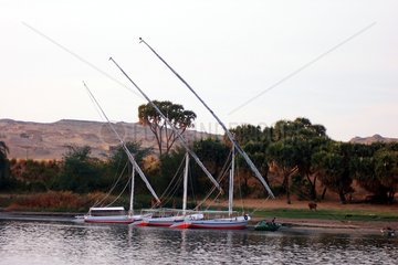 _gypten Nil Ufer Libysche Wueste Felluken