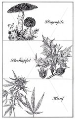 Anregende Pflanzen 2