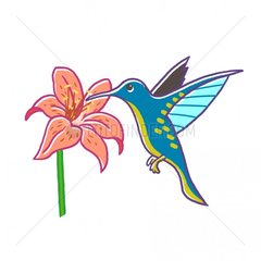 Kolibri Vogelart Bluete grafisch freigestellt bunt