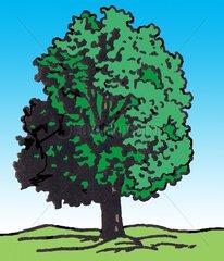 Baum / Vignette