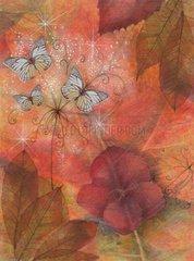 Schmetterlinge Blumen Herbst