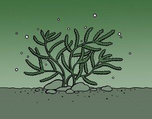Wasserpflanze Alge Unterwasserwelt