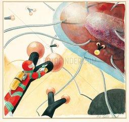 Bakterienzelle Antikoerper Imunabwehr Kinderbuch