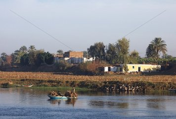 Nilufer Aegypten