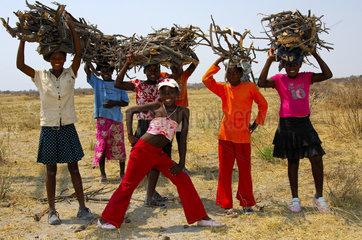 Holzsammler  Botswana