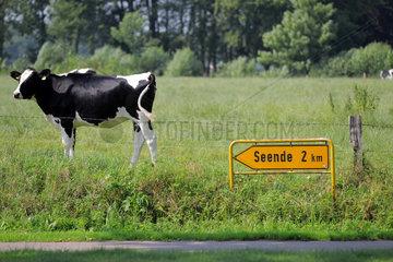 Soerup  Deutschland  Kuh und laendliche Idylle auf einem Feld vor dem Schild Seende