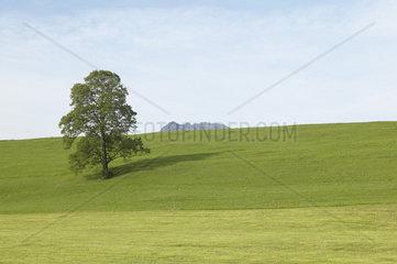 Landschaftlich