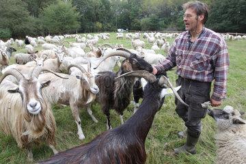 Flensburg  Deutschland  Schaefer mit Ziegen und Heidschnucken