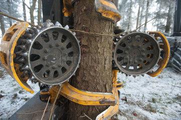 Neumuenster  Deutschland  Arbeitskopf des Holzvollernters wird an einen Stamm angesetzt