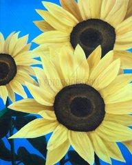 Sonnenblumen Blumen