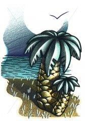 Palmen am Strand Meer Moewe