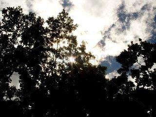 Sonnenstrahlen zwischen Blaettern