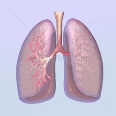 Lunge Medizin