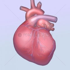 Herz Medizin