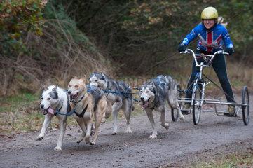 Burg  Deutschland  Europameisterschaft der Schlittenhundefahrer
