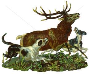 Jagdszene  Hunde jagen Hirsch  Illustration  1885