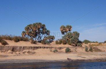 Nilufer Libysche Wueste Aegypten
