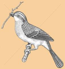 Vogel mit Zweig Nestbau freigestellt