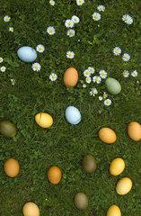 Ostereier auf der Wiese
